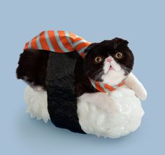 Sushi Cats (Neko-Sushi) by the Japan-based company Tange & Nakimushi Peanuts are a series of photographs of cute dressed up felines resting on top of sushi rice.