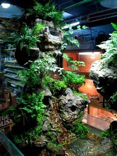 Paludarium By: Arthur Mak, with waterfall and cave. Water Terrarium, Gecko Terrarium, Aquarium Terrarium, Reptile Terrarium, Nature Aquarium, Terrarium Diy, Planted Aquarium, Aquarium Fish, Reptile House