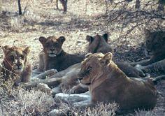 Südafrika: LIVE Safari aus dem Krüger National Park (Krügerpark)