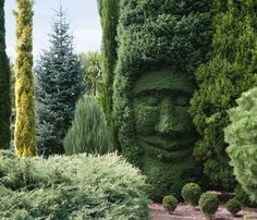 Planting, training and trouble-shooting hedges plus great plants for different hedge effects