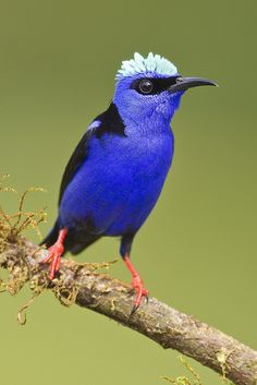 Honeycreeper is Here! by Jeff Dyck