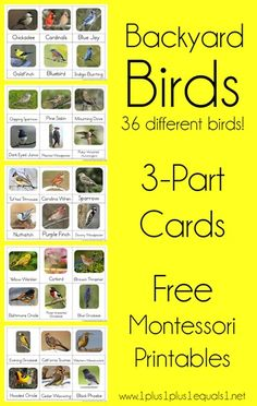 Backyard Birds Nomenclature Printables ~ Free Montessori 3 Part Cards