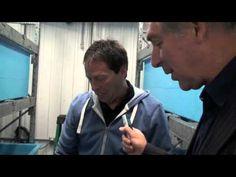 Une découverte inusitée à Rimouski: un homard femelle orange chez Distributions Arnaud à Rimouski!
