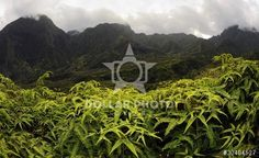 http://www.dollarphotoclub.com/stock-photo/Iao park./30404527 Dollar Photo Club millions of stock images for $1 each