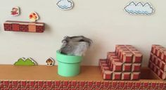 A Hamster Dominating A Real-Life Version Of 'Mario'