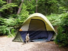 How to Prepare Your Dog for Camping - Top Dog Tips