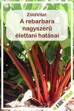Health, Plants, Health Care, Plant, Planets, Salud