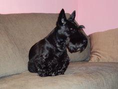 Wesley is watching tv!