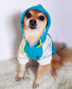 Jumpsuits & Rompers Ambitious High Quality Dog Clothes Winter Dog Jumpsuit Hooded Coat Jacket Chihuahua Poodle Bichon Pet Clothing Overalls Small Dog Costume Fashionable Patterns