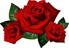 image of clip art red rose 7092 red roses clip art images free rh pinterest com red rose clip art free single red rose clipart