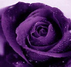 purple color - Αναζήτηση Google