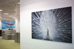 Photo Panel Printing | SAS Graphics
