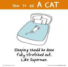Or curled up in a ball. Crazy Cat Lady, Crazy Cats, I Love Cats, Cool Cats, Cat Quotes, Funny Quotes, Funny Cats, Funny Animals, How To Cat