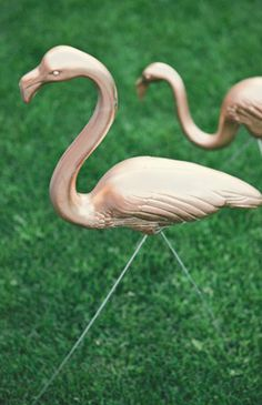 gold flamingo / photographed by Mike Carreiro