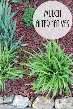 Mulch Alternatives - adding curb appeal to your home with alternatives to traditional landscape materials! MyOutdoorOasis #ad @lowes