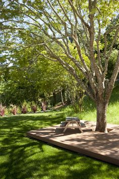 Deck Around Tree Design Ideas, Pictures, Remodel, and Decor - page 3
