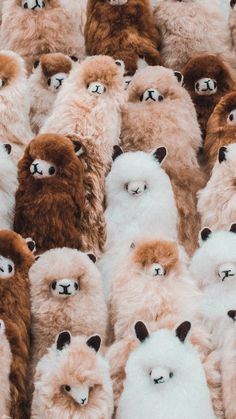 Cute Wild Animals, Baby Animals Super Cute, Baby Animals Pictures, Cute Animal Photos, Cute Little Animals, Cute Funny Animals, Cute Pictures, Animal Wallpaper, Disney Wallpaper