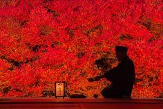 CMの舞台にも使用された!障子越しに眺める「安国寺」の紅葉が美しすぎる