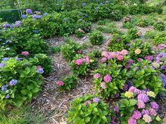 Busan, Plants, Plant, Planets
