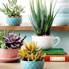 Tazones de colores con plantas 💕