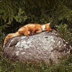 Like cats, foxes seem to get comfortable just about anywhere. Fox by Krasska Nature Animals, Animals And Pets, Baby Animals, Funny Animals, Cute Animals, Wild Animals, Woodland Creatures, Cute Creatures, Beautiful Creatures