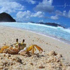 Ghost Crab - Long Bay - Tortola - British Virgin Islands