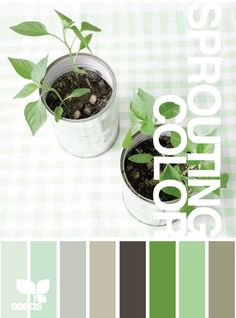 Color scheme (with some pale/sky blues) Bedroom Color Schemes, Paint Schemes, Colour Schemes, Color Combos, Green Palette, Colour Pallette, Color Palate, Room Colors, House Colors