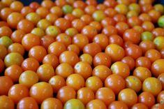 Koktélparadicsom – Sungold Vegetables, Food, Essen, Vegetable Recipes, Meals, Yemek, Veggies, Eten