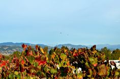 Getaway to The Meritage in Napa!