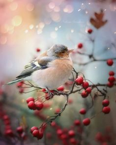 I heard a bird sing in the dark of December. A magical thing. And sweet to remember. We are nearer to Spring than we were in September. Nice To Meet, Meet You, Flying Photography, Fat Bird, Birds Eye View, English Roses, Beautiful Moments, Bird Houses, Mother Nature