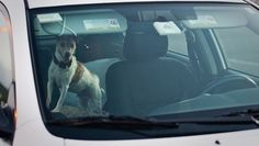 You may enjoy taking your canine companion for a ride during the dog days of summer, but experts advise pet owners not to leave dogs, cats or any other pets unattended in a hot car.