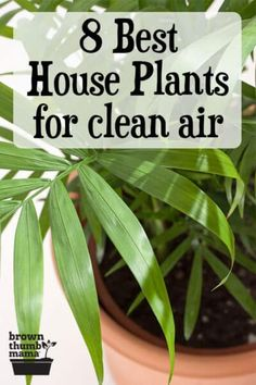These 8 indoor plants clean the air while they beautify your home. These house plants are easy to care for, and they improve air quality and reduce toxins too. Includes recommended varieties and growing tips. #gardening #nontoxic #ecofriendly #natural #naturalliving