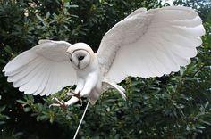 Beautiful Wood And Paper Birds Sculptures By Zack Mclaughlin http://designwrld.com/beautiful-wood-and-paper-bird-sculptures-by-zack-mclaughlin/