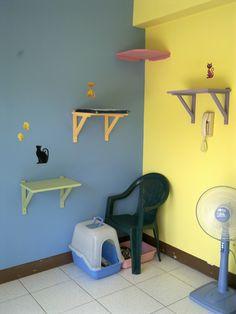 My cat room