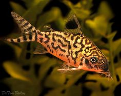 Feeders fish bottom