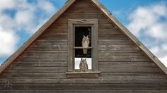 Hooters by Robert Scott on Robert Scott, Whimsical Owl, Abandoned, Cool Photos, Cabin, Country, House Styles, Building, Owls