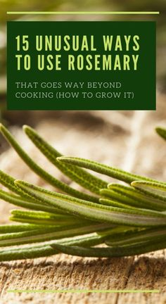It will fill your yard with wonderful fragrance and enrich your cooking with wonderful taste. #rosemary