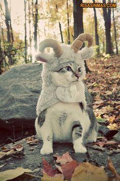 Disfraces gatunos: de Cabra. #amorgatuno