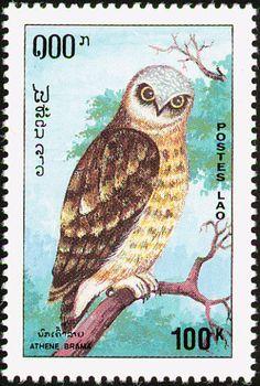 1362 best owl postage stamp images on pinterest in 2018 door bells