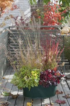 The most beautiful potted plants with ornamental grasses and flowering plants - Topfgarten - Pflanzen Perennials Fabric, Full Sun Perennials, Shade Perennials, Fall Plants, Potted Plants, Indoor Plants, Flowering Plants, Container Flowers, Container Plants