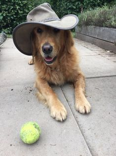 """""""Nigel in his hippy hat during today's filming"""" Lily Beetle, Monty Don, Early Spring Flowers, Herbaceous Perennials, Grass Seed, Growing Seeds, New Growth, Garden Inspiration, Golden Retrievers"""