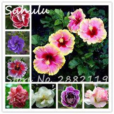 Cheap 100pcs rare giant hibiscus seeds beautiful flowers outdoor bonsai potted plants mix colors perennial home garden plants