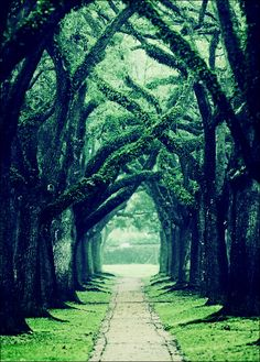 Oaks Alley in Houston | Texas (by Katya Horner)