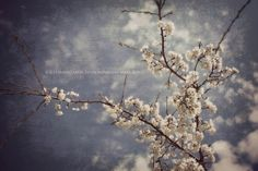 Thoughts in the Clouds by Carrie Morettini on Etsy