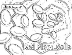 biolegend legendary coloring book - Cell Coloring Page