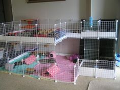 This is my double storey c&c cage. I have 10 girls on the bottom & 5 boys up the top.
