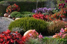 Ogrody Hortulus Spectabilis to zespół ogrodów o powierzchni około 6 ha, w którym znajdziemy: magiczny kamienny krąg, Ogrody 4 Pory Roku, Ogród Zegarów, Ogród Kalendarz Celtycki oraz angielskie rabaty bylinowe cieszące oko kolorami i elementami architektonicznymi, rosarium z parterami bukszpanowymi, ale również ogrody węzłowe i topiary bukszpanowe. #jesien #ogrod #garden #autumn #kompozycjajesienna #ogrodozdobnyjesienia #begonia #wrzos #wrzosiec #erica #calluna #dalia #dahlia #trawyozdobne Pumpkin, Plants, Outdoor, Outdoors, Pumpkins, Plant, Outdoor Games, Squash, The Great Outdoors