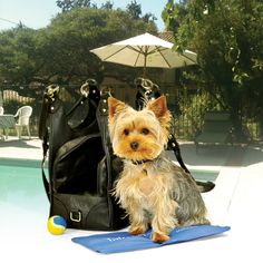 Summertime Dog Carrier Cooling Pad- I now have seen it all....