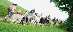 Lama your life am Ruhepol Tirol Dalai Lama, Your Life, Animals, Alpacas, Find Friends, Summer, Animales, Animaux, Animal