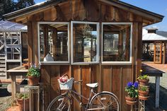 Simply Elegant Greenhouse  #greenhouse #sheshed #reclaimedwood #fenceboards #vintagewindows